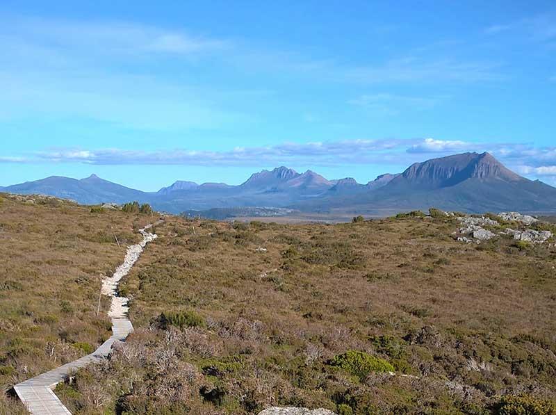 Pam Allen landscape