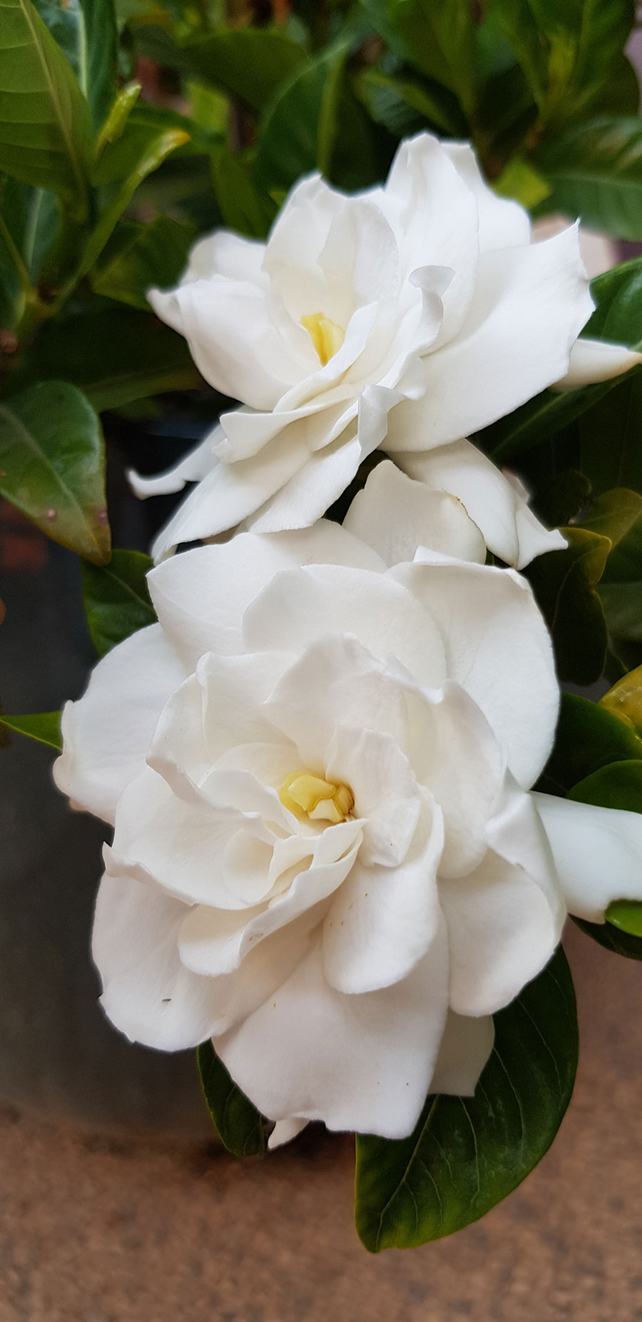 Meditation flower2